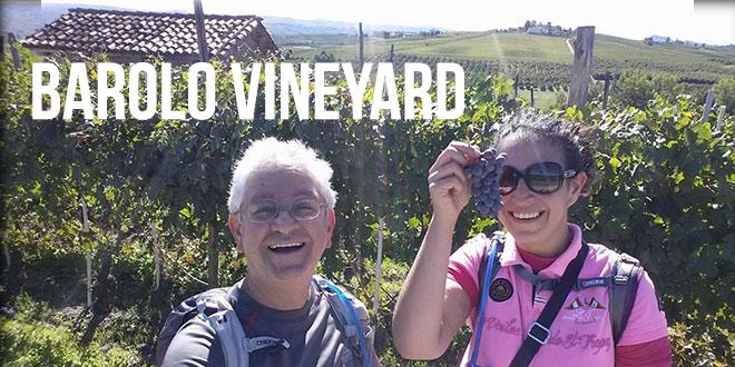 hiking in Italy,  Barolo Vineyard