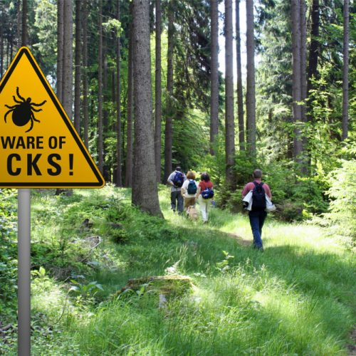 Stay safe against ticks