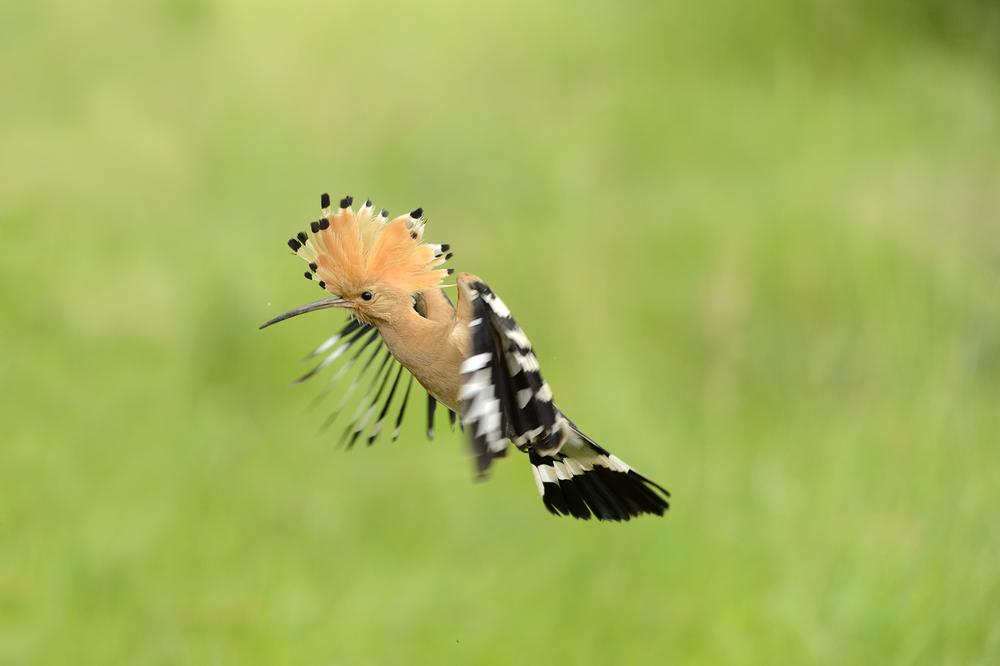 10 great birdwatching apps - Blog - Macs Adventure