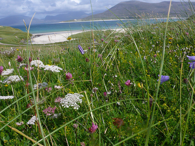 The famous machair. Pic credit: Captain Oates on Flickr Creative Commons