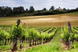 Walking in wine territory