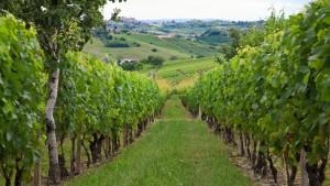 662.Piedmont-Vineyards-(2)