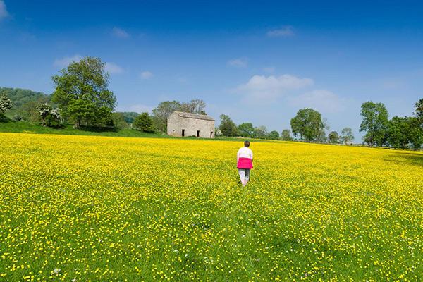 Walking through a field of buttercups.