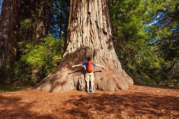 california-tree-hug-usa