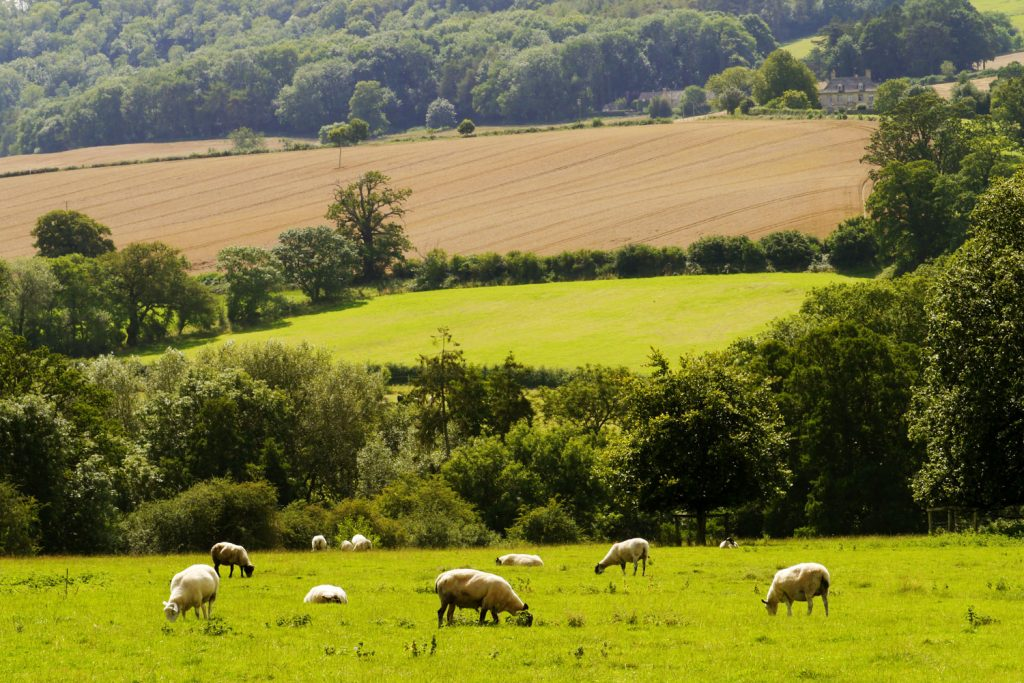 winchcombe_sheep_countryside