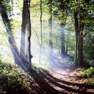 _walking__scotland__scotlandsbeauty___fifecoastalpath__macsmoment__woodlands__sunbeams_by_james3794