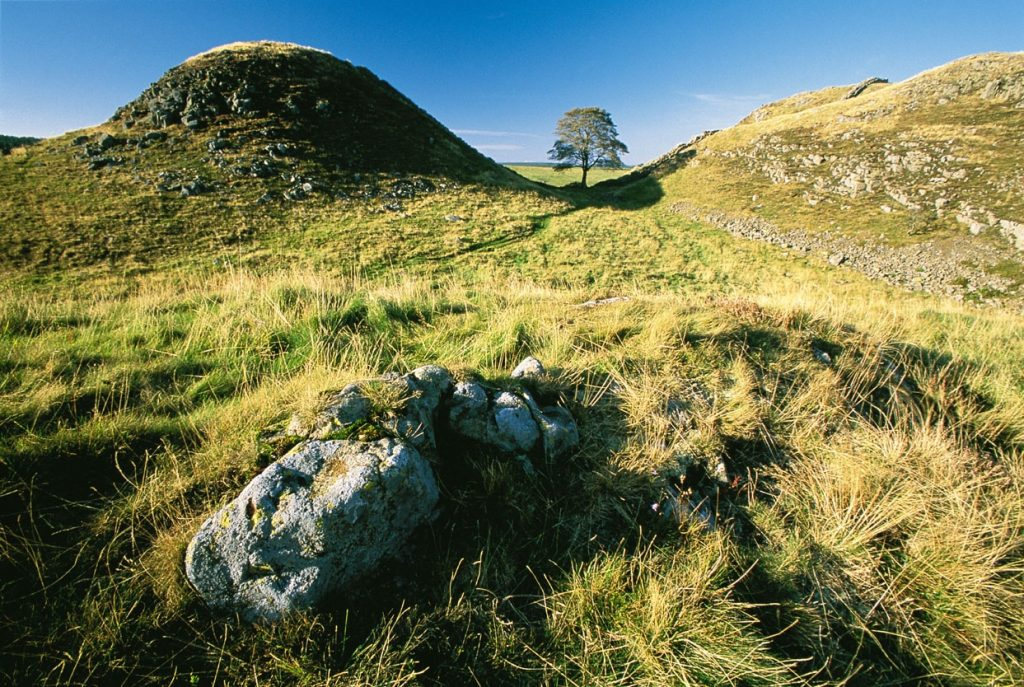 Sycamore Gap, The Most Photographed Tree in The Northumberland National Park