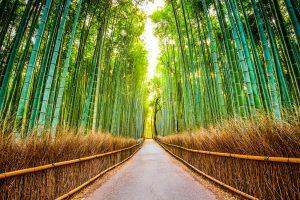 A bamboo forest along the Shikoku Pilgrimage Trail, Japan