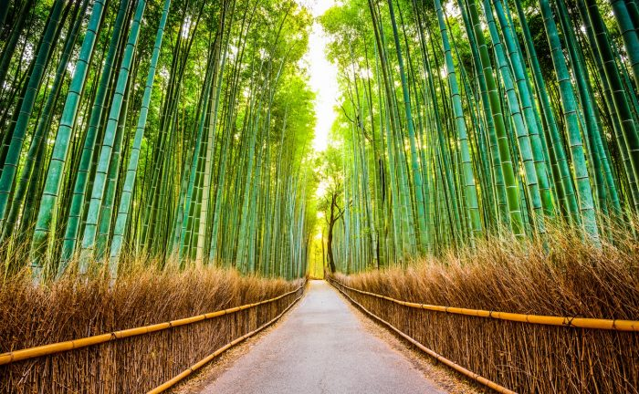 A bamboo forest along the Shikoku Pilgrimage Trail, Japan