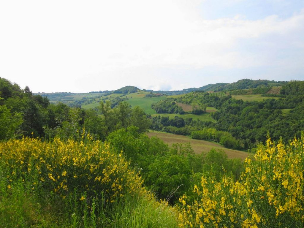 Piedmont region landscape on the Barolo Vineyard tour