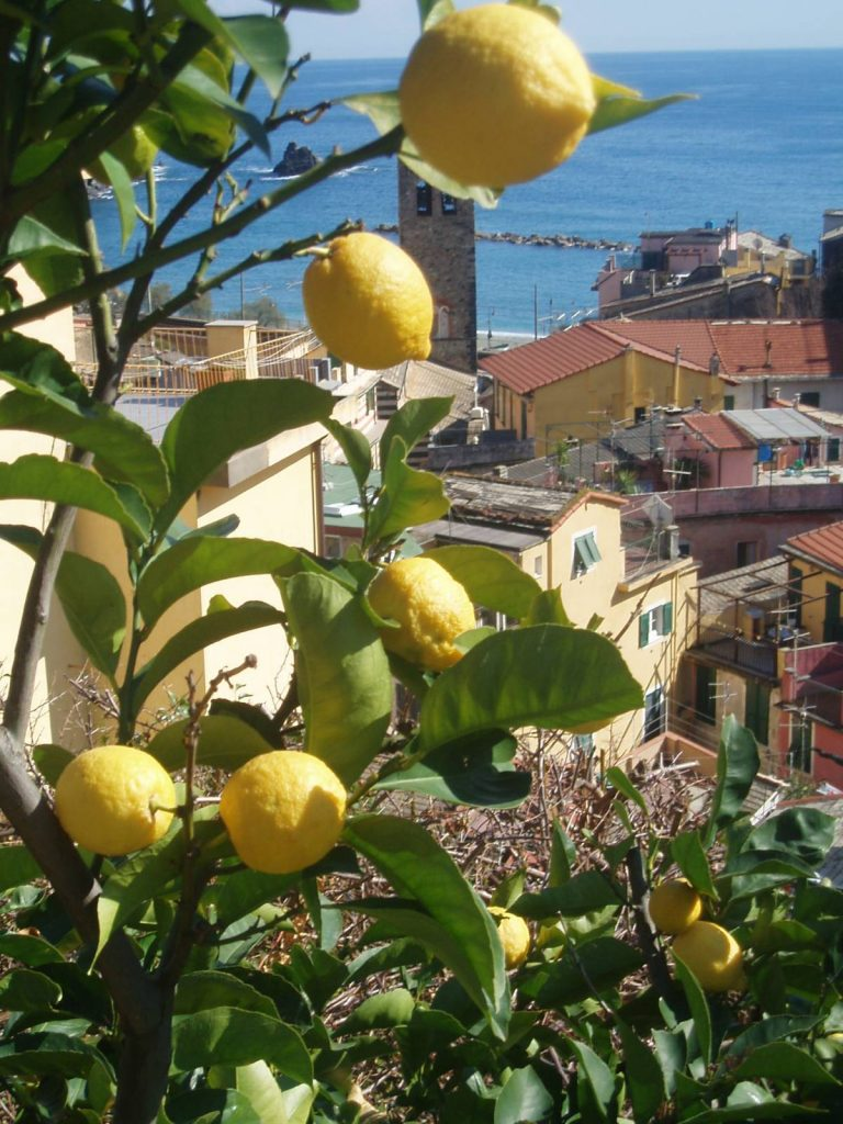 Lemons grow above the town of Monterosso.