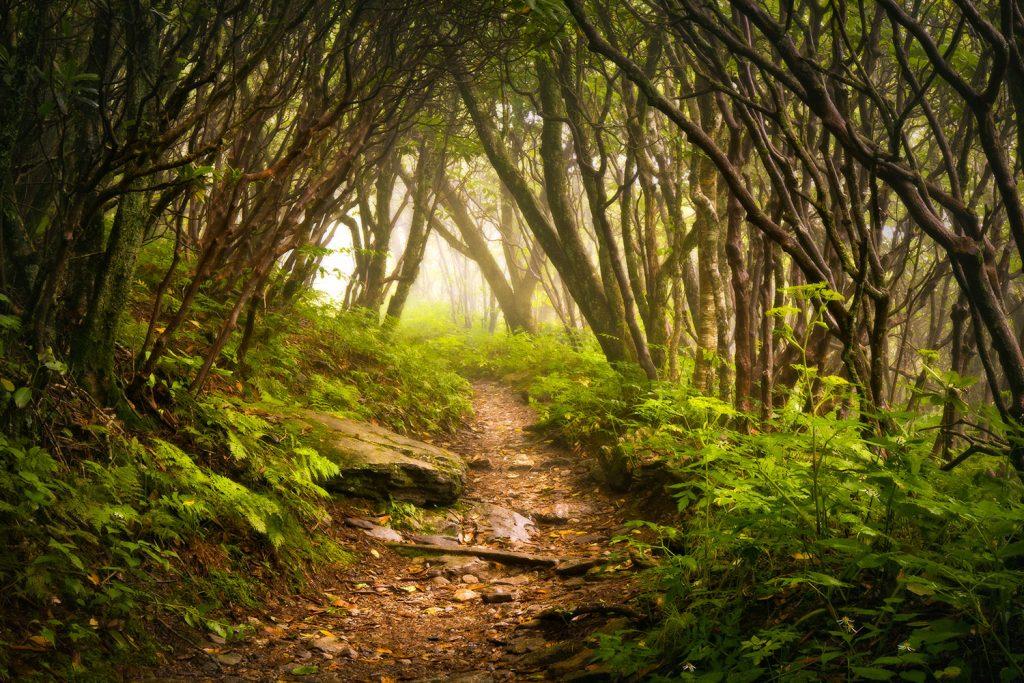 Appalachian trail passes through a dark forest