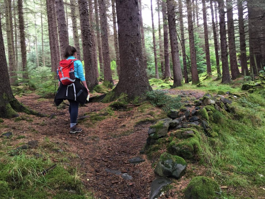 Lizzie in the Craggan Forest to Killin