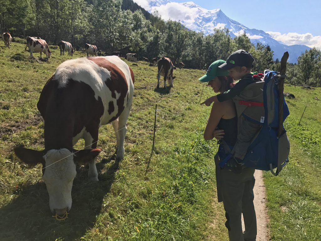 Toddler pointing at cow on the Tour du Mont Blanc