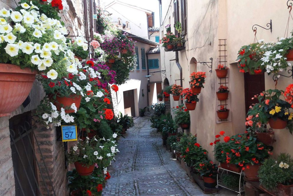 Flowers in Spello