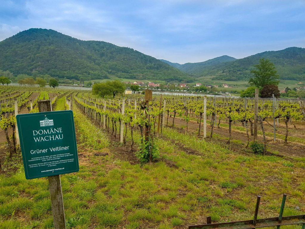 Gruner Veltliner vineyard