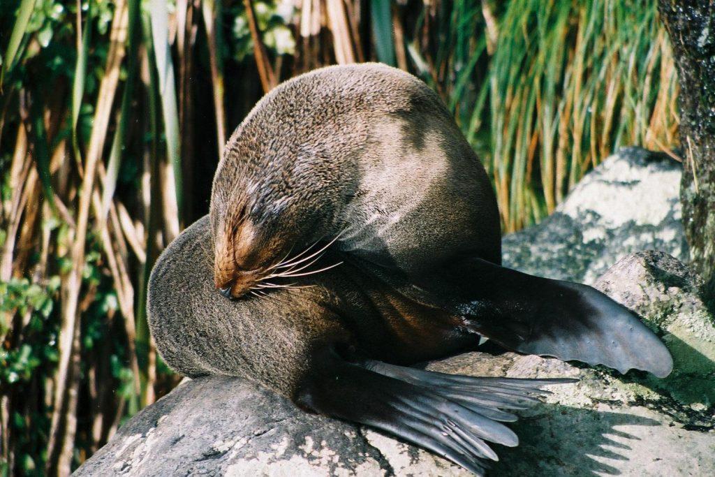 Coastal wildlife in New Zealand